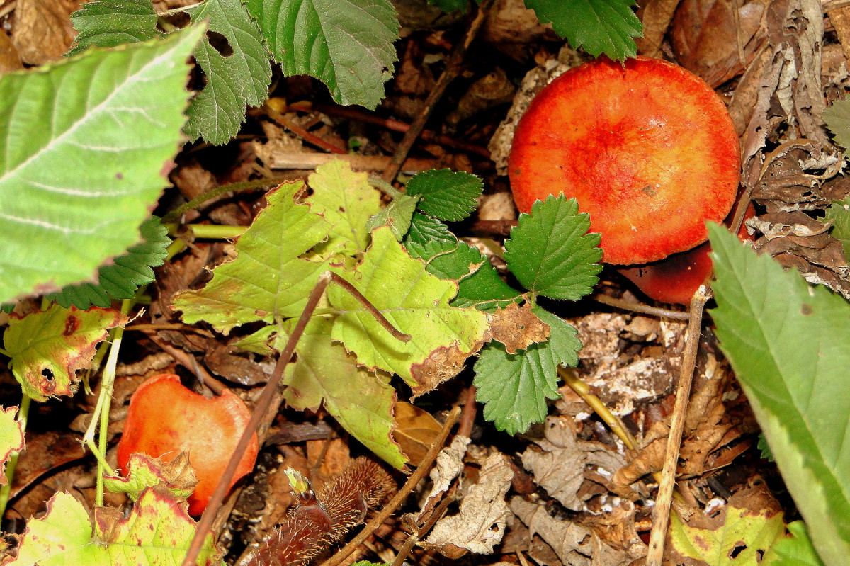 Colorful toadstools sprout from the forest floor.