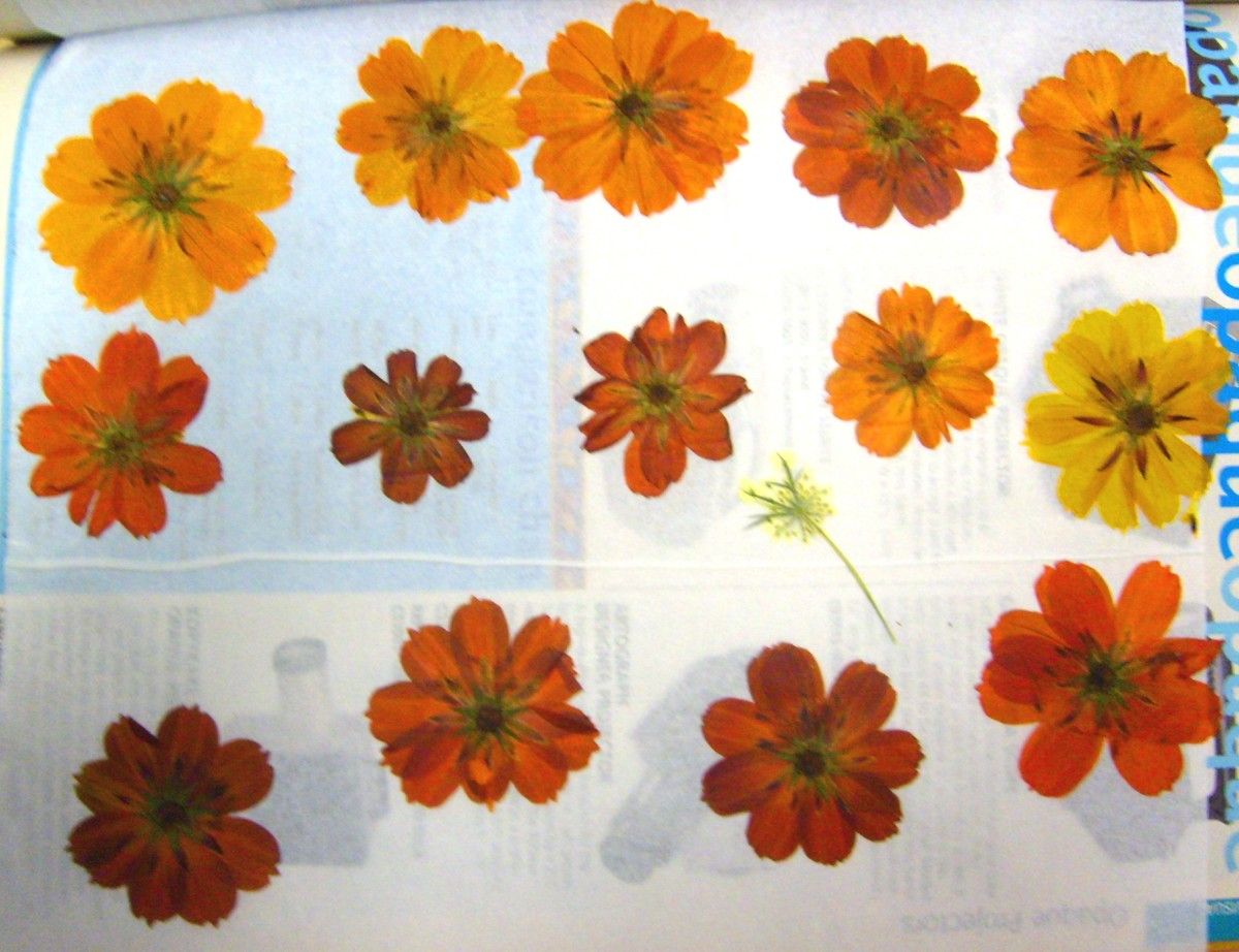 Brilliant orange cosmos make for eye catching design.