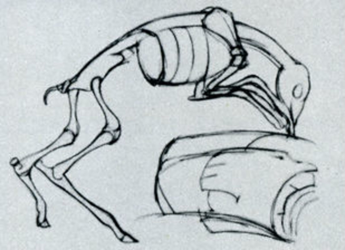 An example of a deer that has been drawn by speed sketching the skeleton.