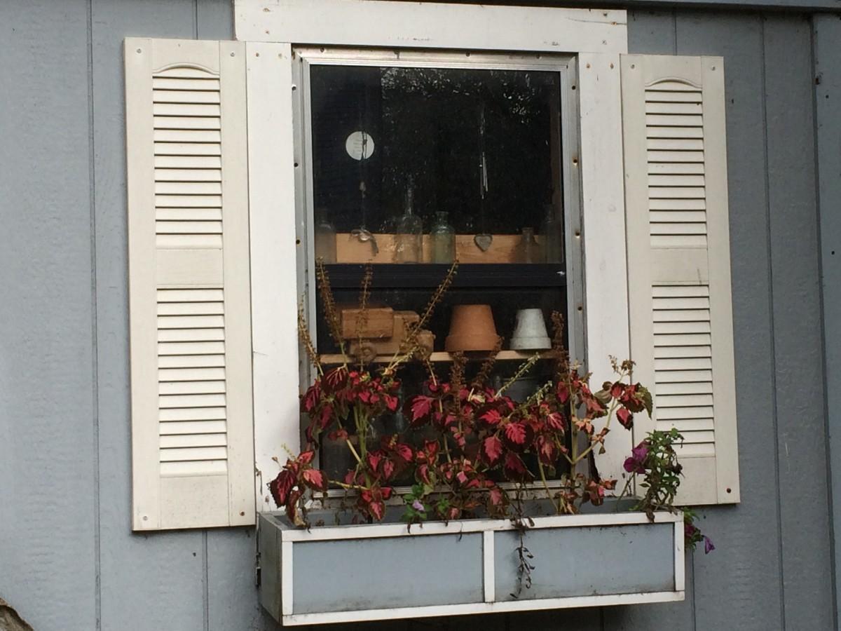 Coleus and petunias in our window planter box