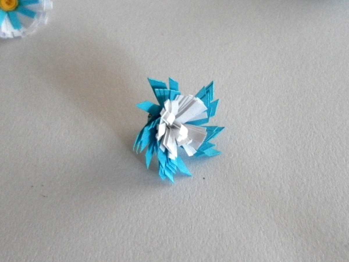 Flower with slanted blue fringe and white fringed centre