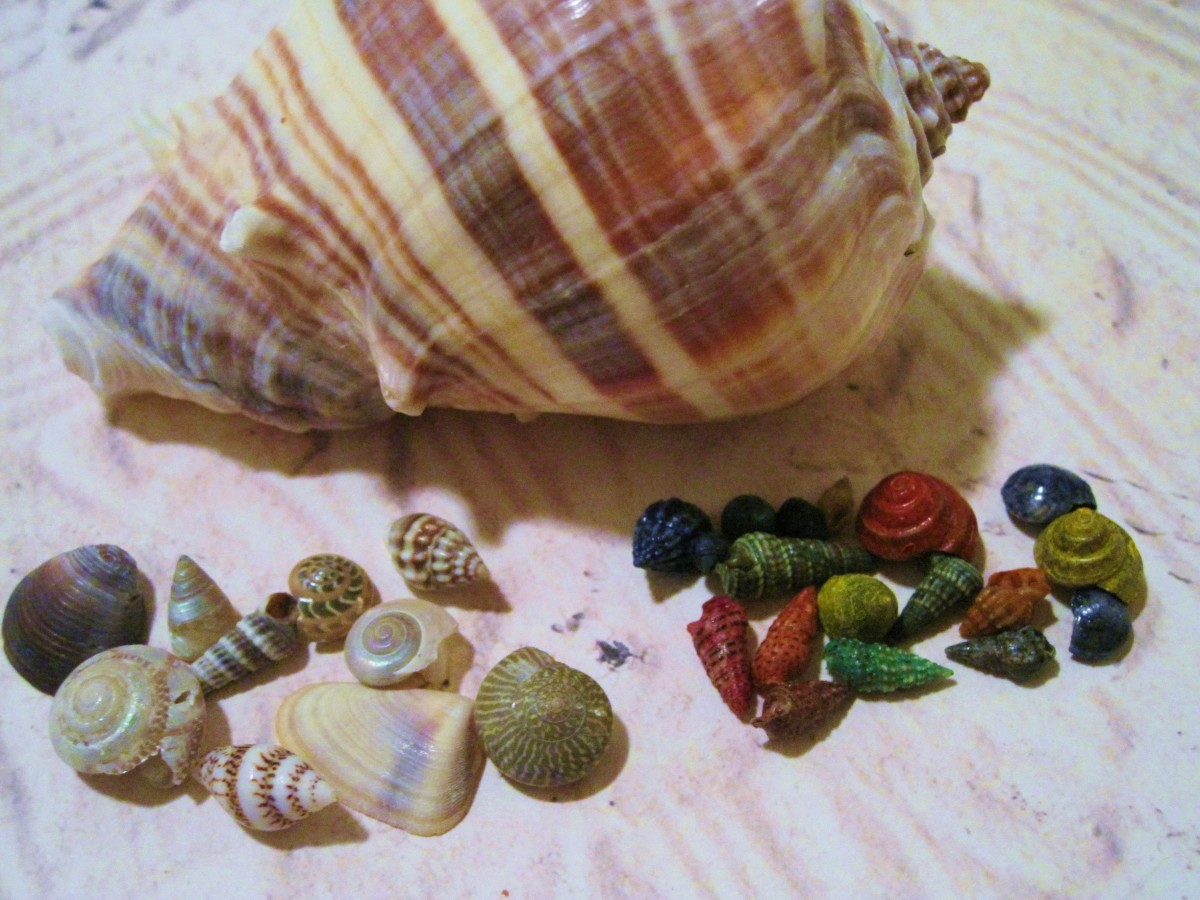 Miniature seashells come in many shapes and colors.