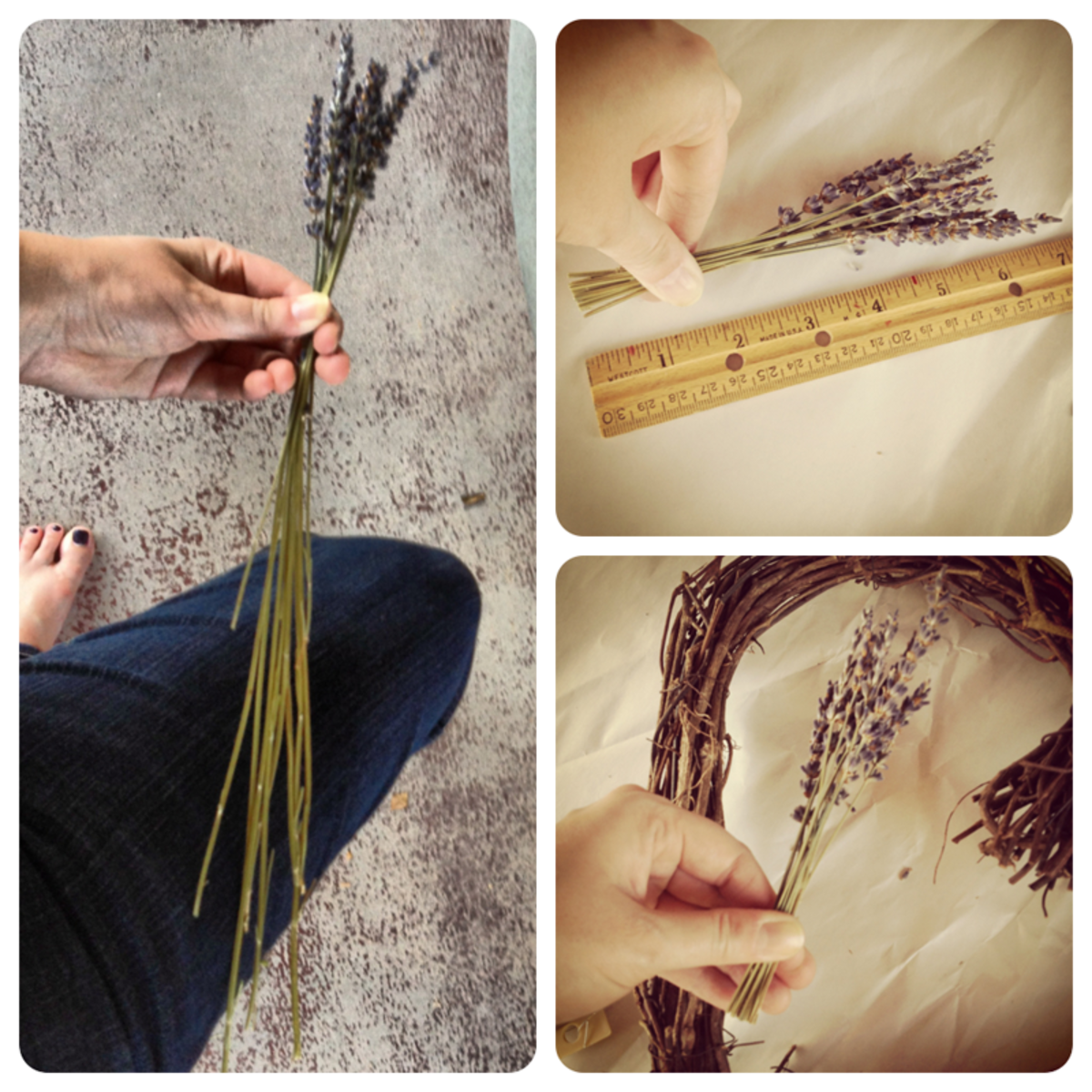 Trim your lavender stems for easy handling