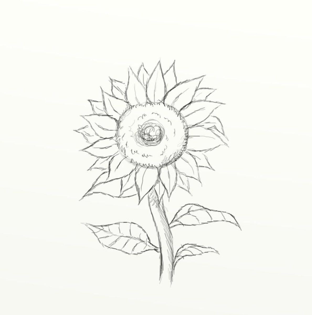 Cara Menggambar Bunga Dan Sketsanya Dengan Mudah