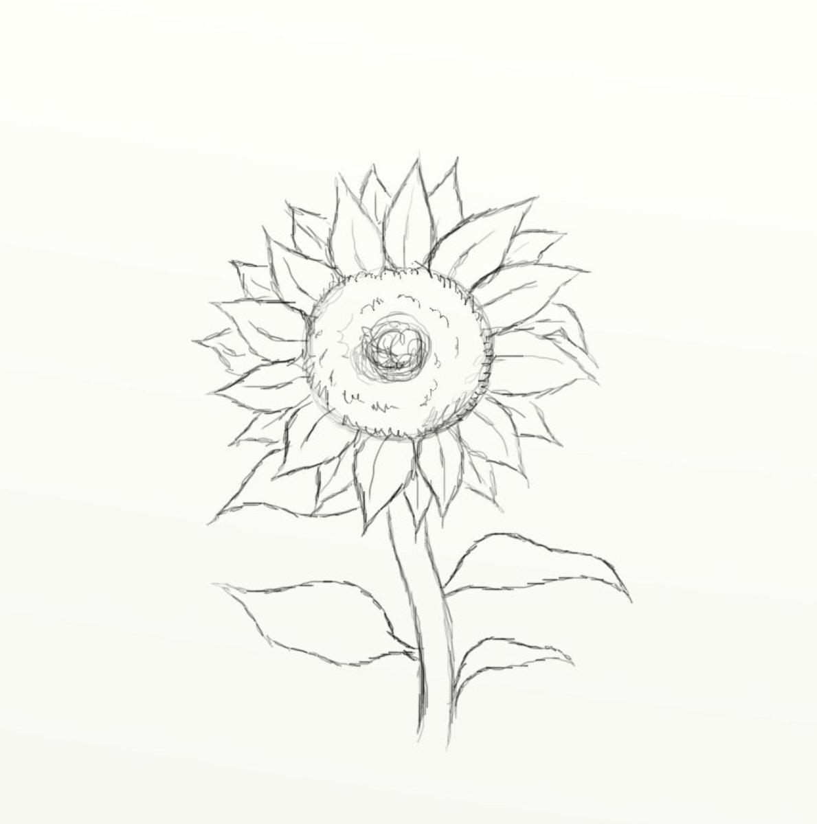 how-to-draw-a-sunflower