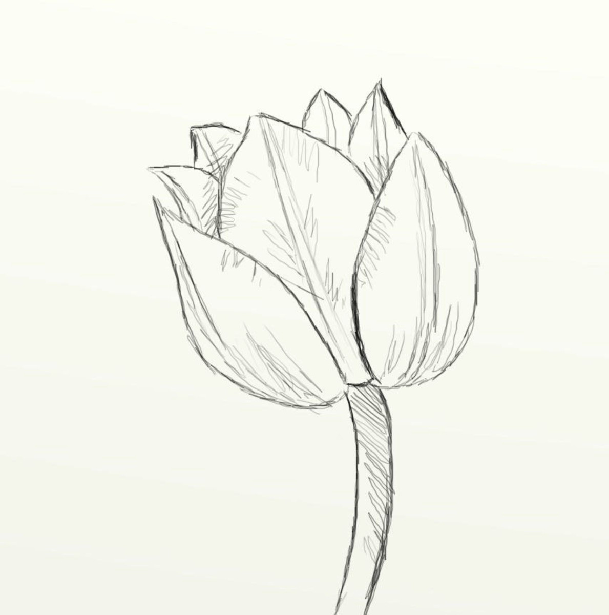 how-to-draw-a-beautiful-tulip
