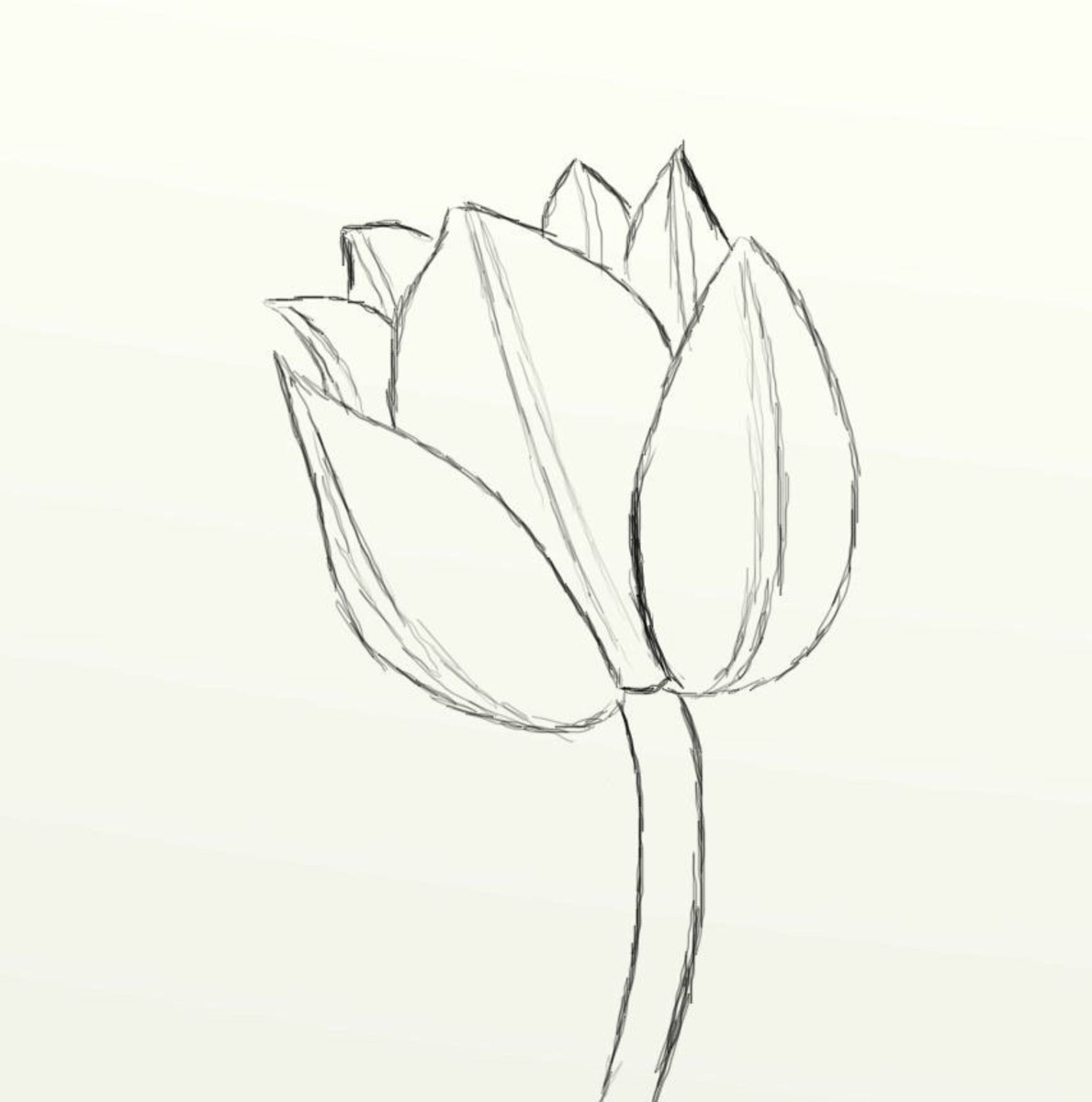 Line Drawing Tulip : How to draw a beautiful tulip feltmagnet