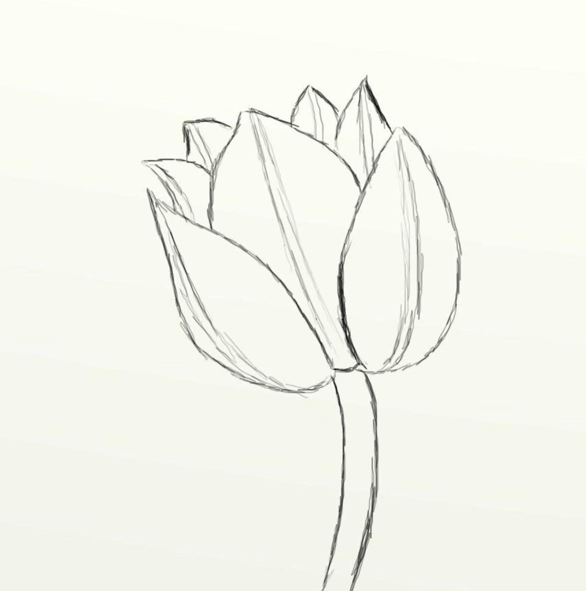 Line Drawing Tulip : Simple tulip drawings imgkid the image kid has it