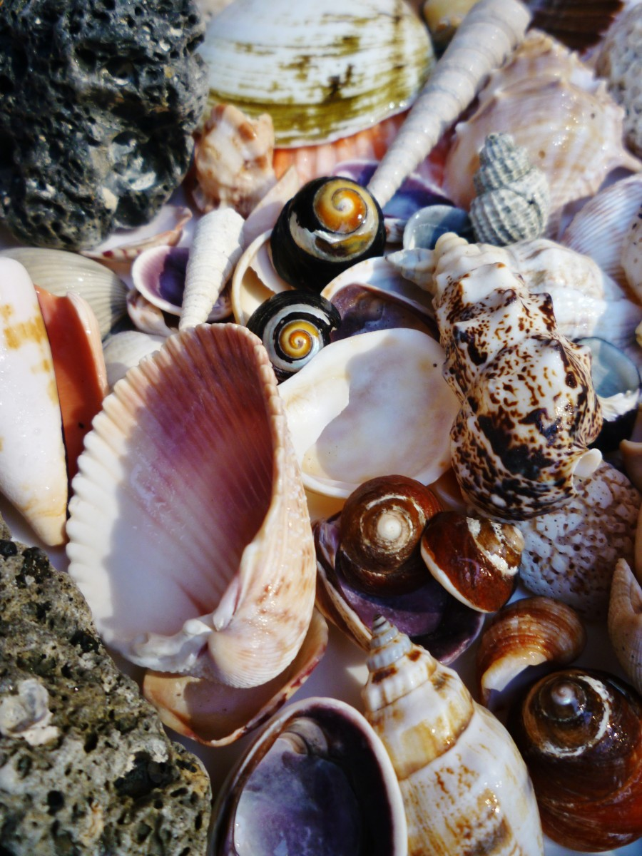 Florida Seashells + other treasures