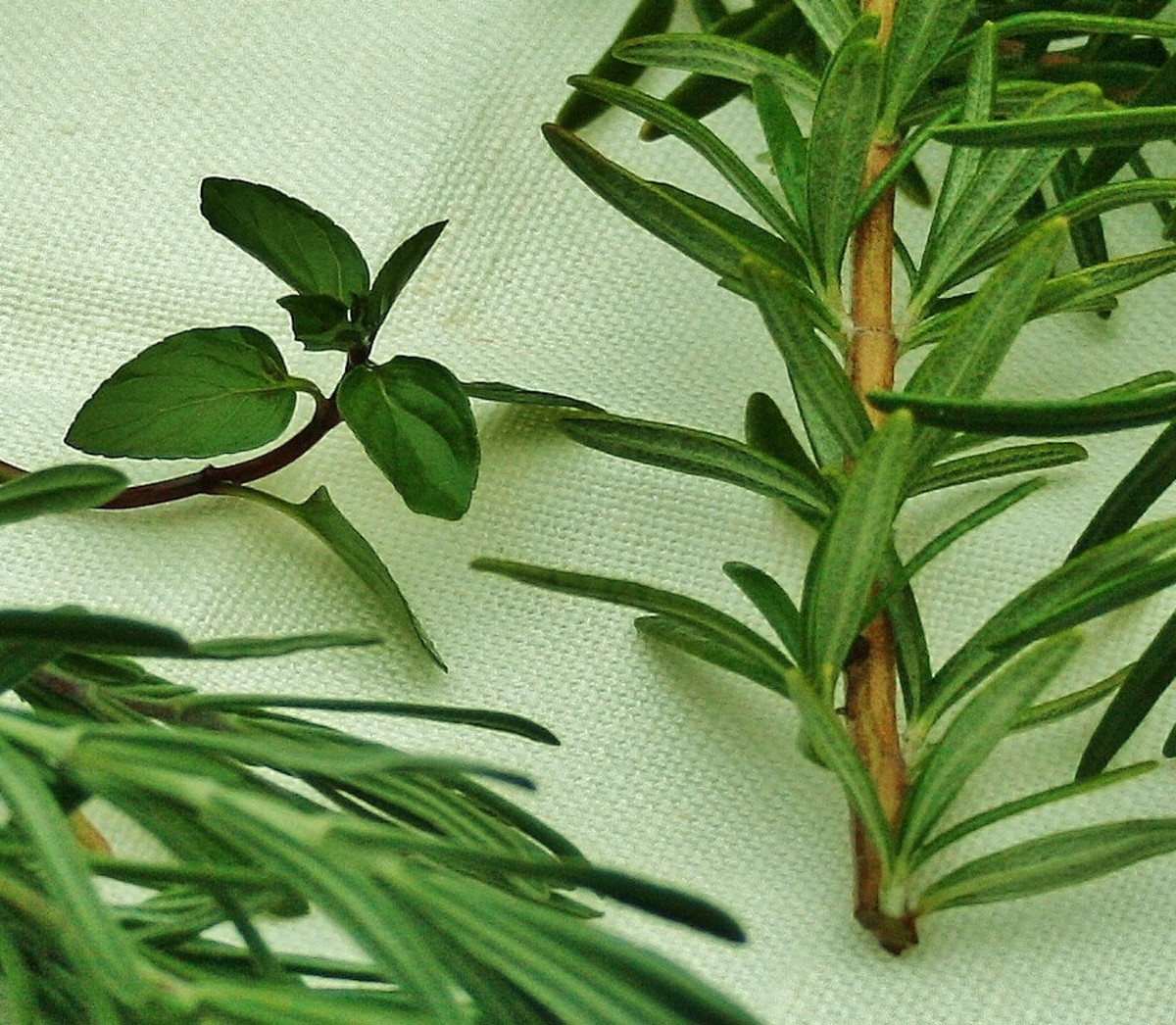 All sorts of herbs may be added to oil and vinegar. Pictured (left to right): lavender, chocolate mint, rosemary.