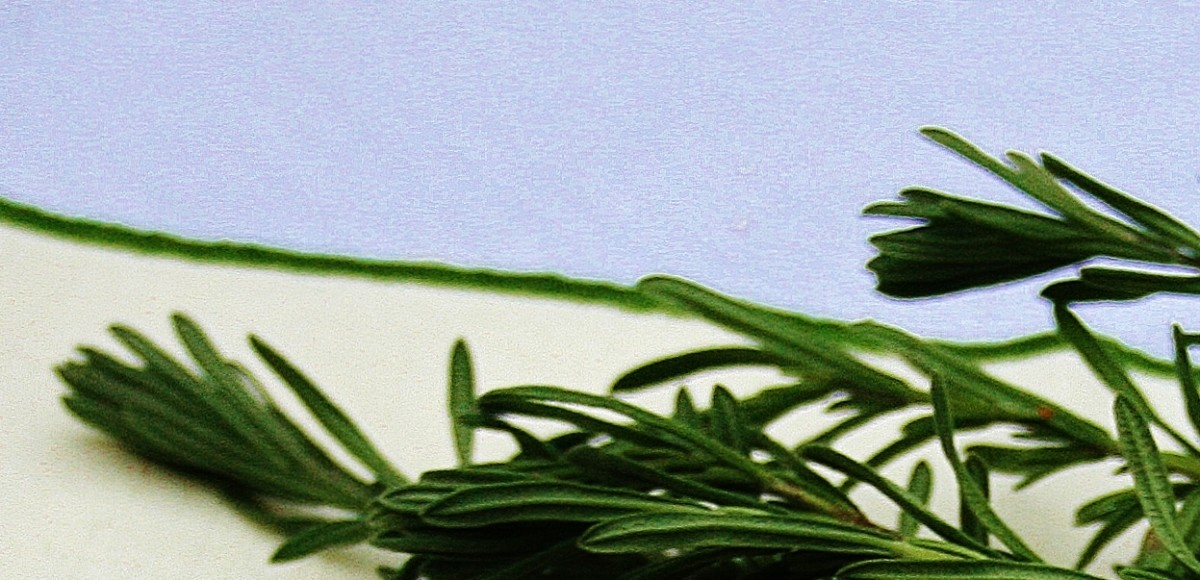 Incense made from dried, grated lavender dispels unpleasant odors.