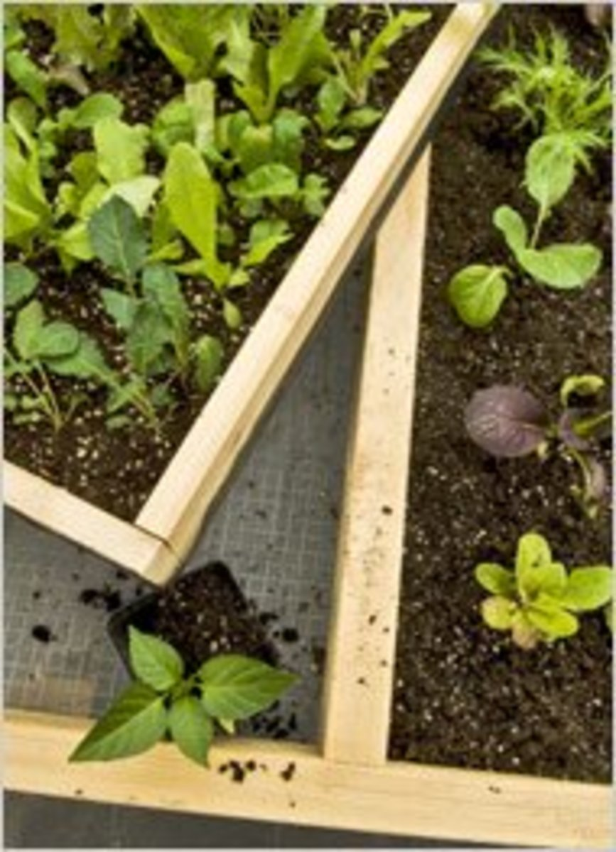 Building TRAYS for your salad bench is another option. Trays can be inserted into the table for a variety of purposes.