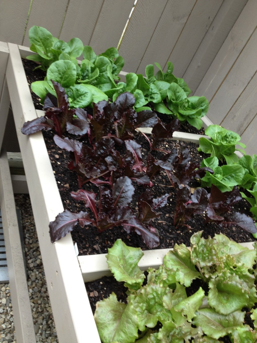 As you can see, we planted about 25 plants in our bench. Within a few days, each compartment will be quite full.