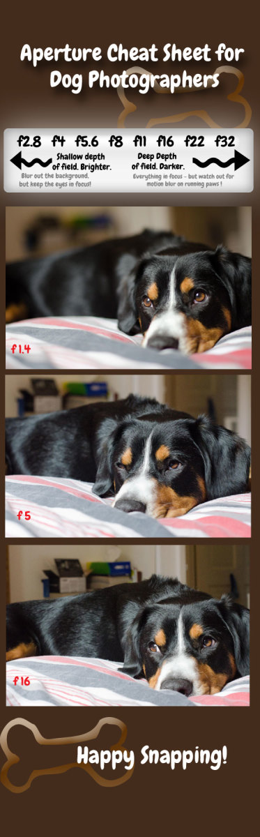 how-to-photograph-dogs-what-is-aperture-and-how-can-it-improve-your-pet-photos