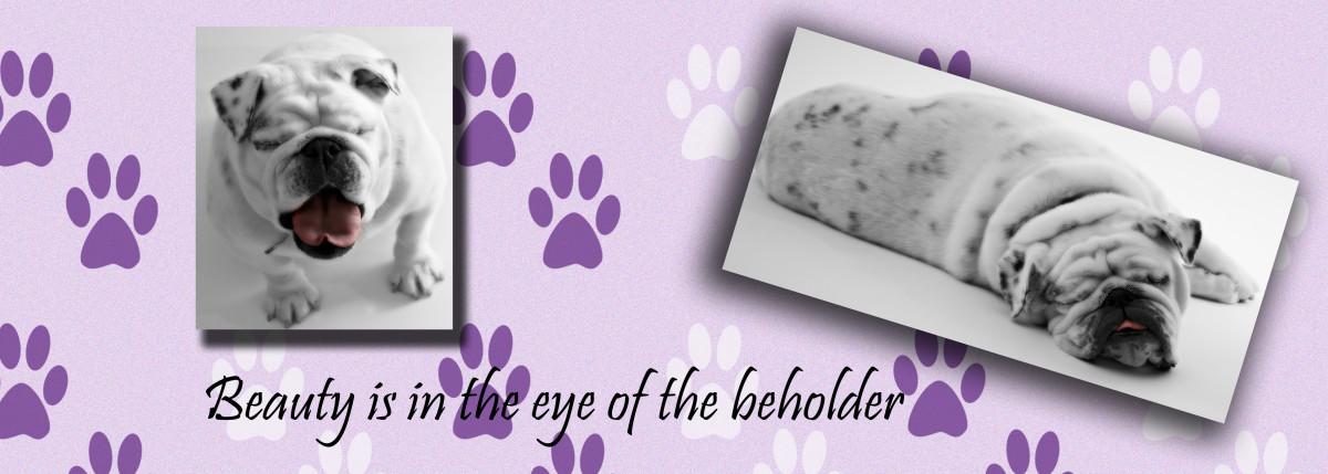 Dog print patterns make an amusing background for pet photos.
