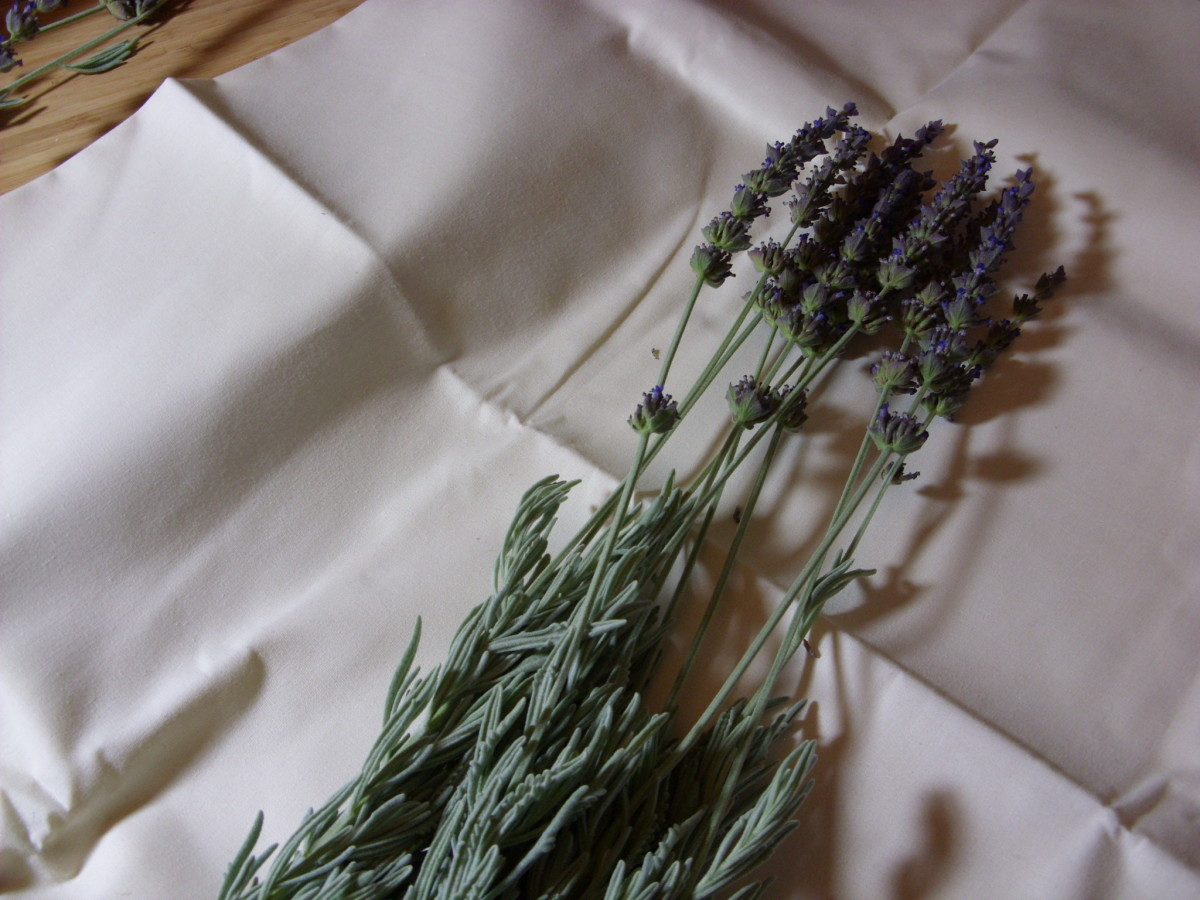 Try to find lavender stems that are at least 10 to 12 inches long.