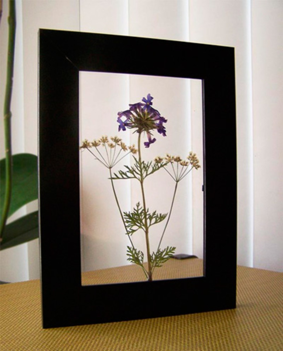 An interesting effect with pressed flowers slotted between glass panes in a photo frame.