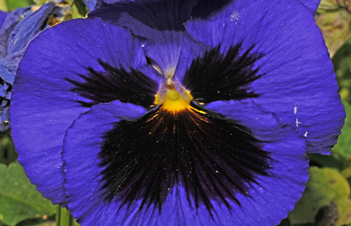 how-to-use-a-wire-frame-to-make-a-3d-wet-felted-pansy