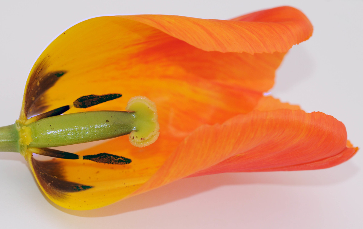 A view of the inside of a Tulip