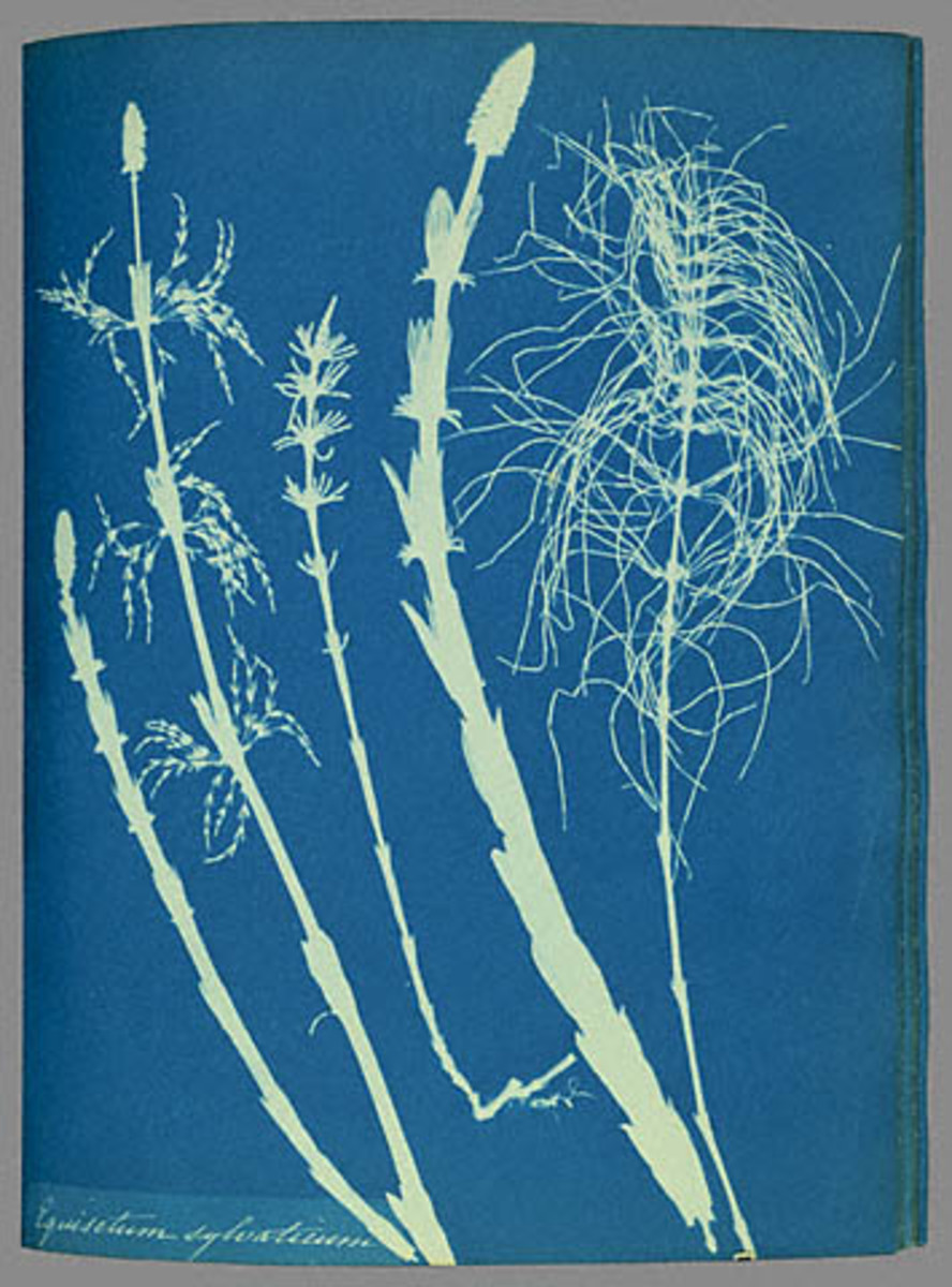 Example of Still Life Cyanotype