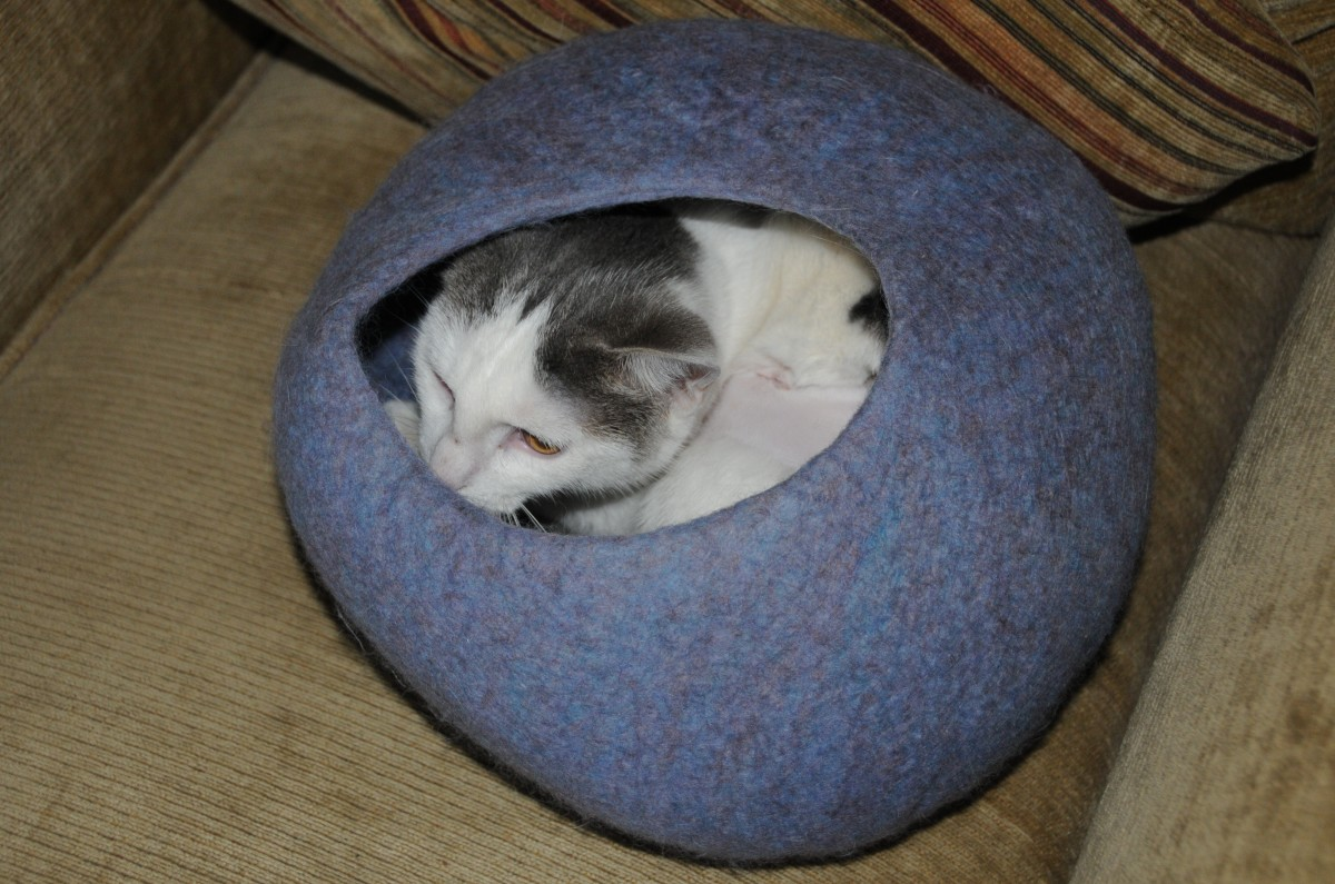 One Kitty Cave occupied by a resident