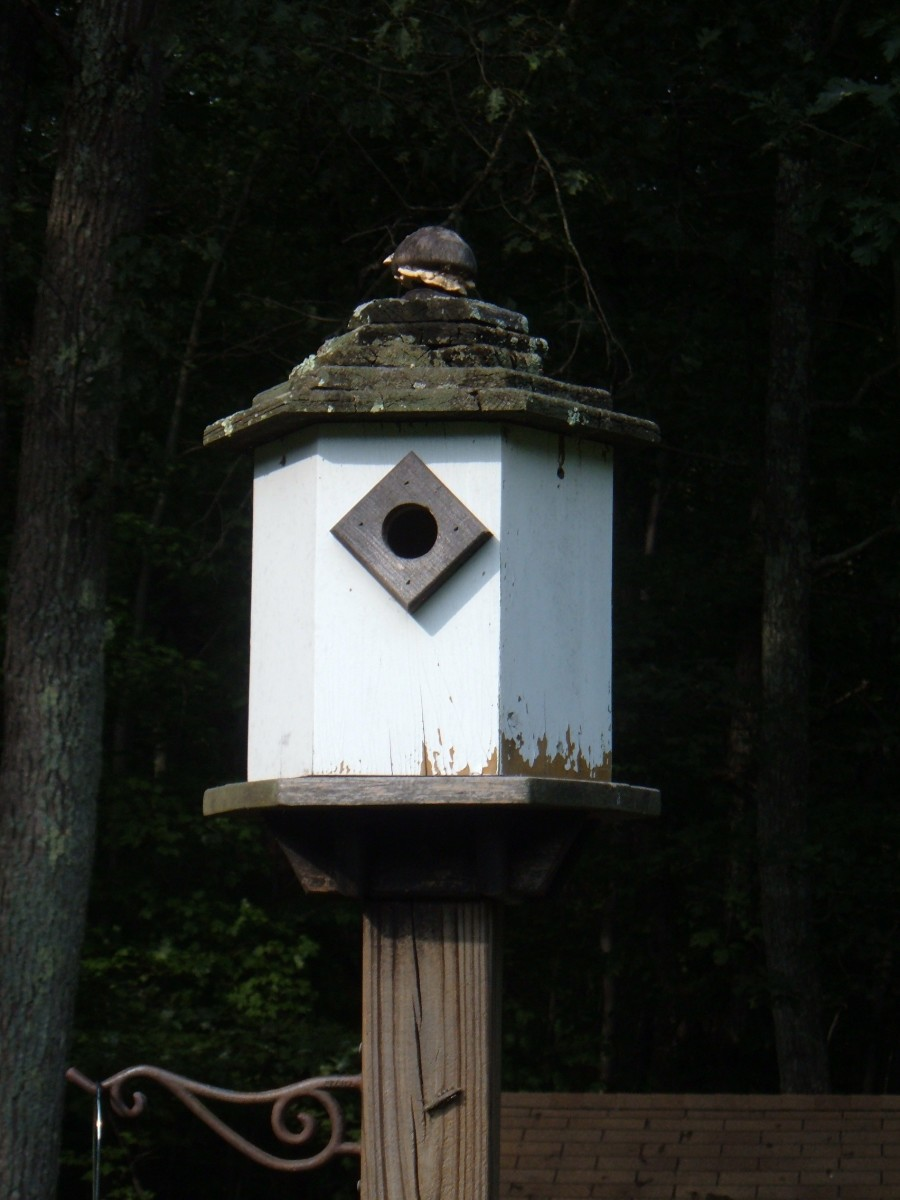 How To Build A Simple Dovecote Style Birdhouse Feltmagnet