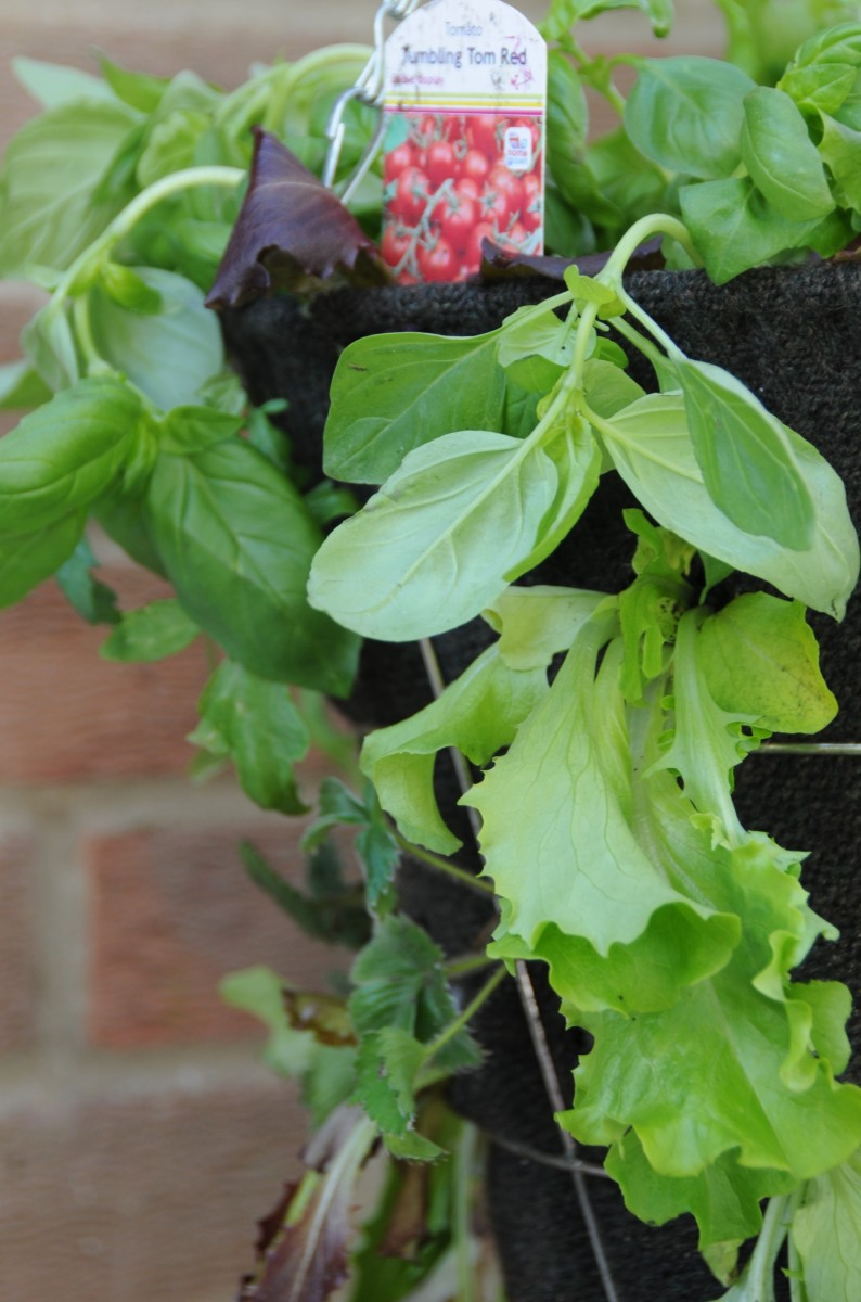 A close up of a salad garden hanging basket