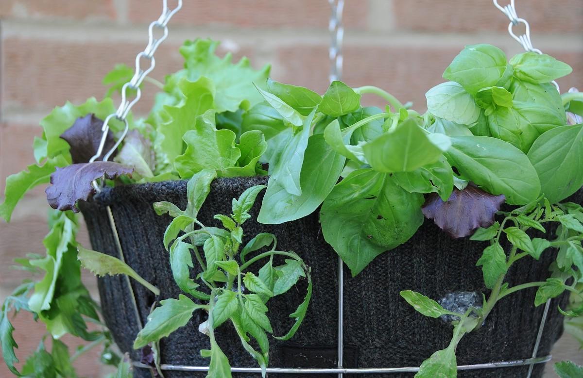 A basket of salad greens