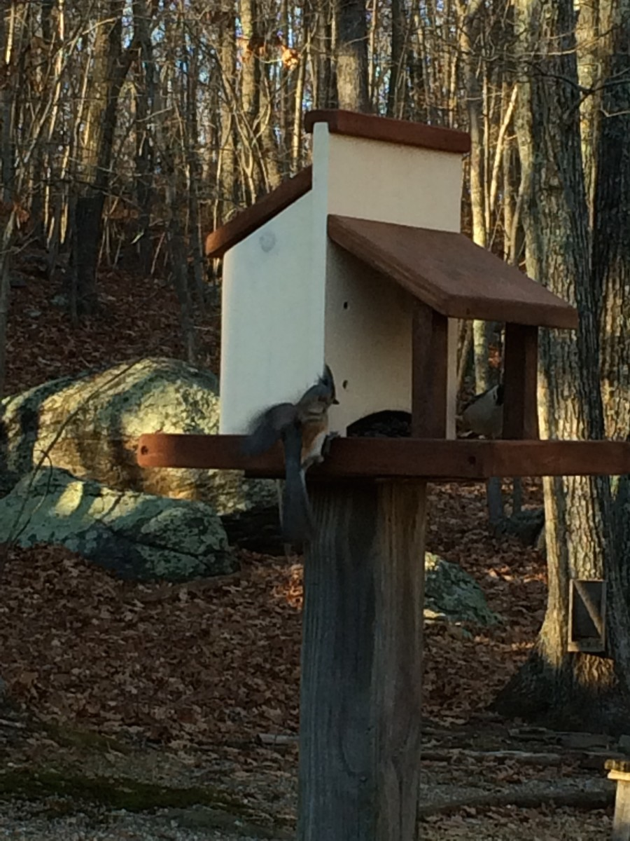 The new platform feeder is popular already!
