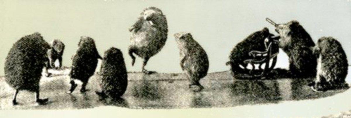 Hedgehogs Tableaux by Hermann Ploucquet
