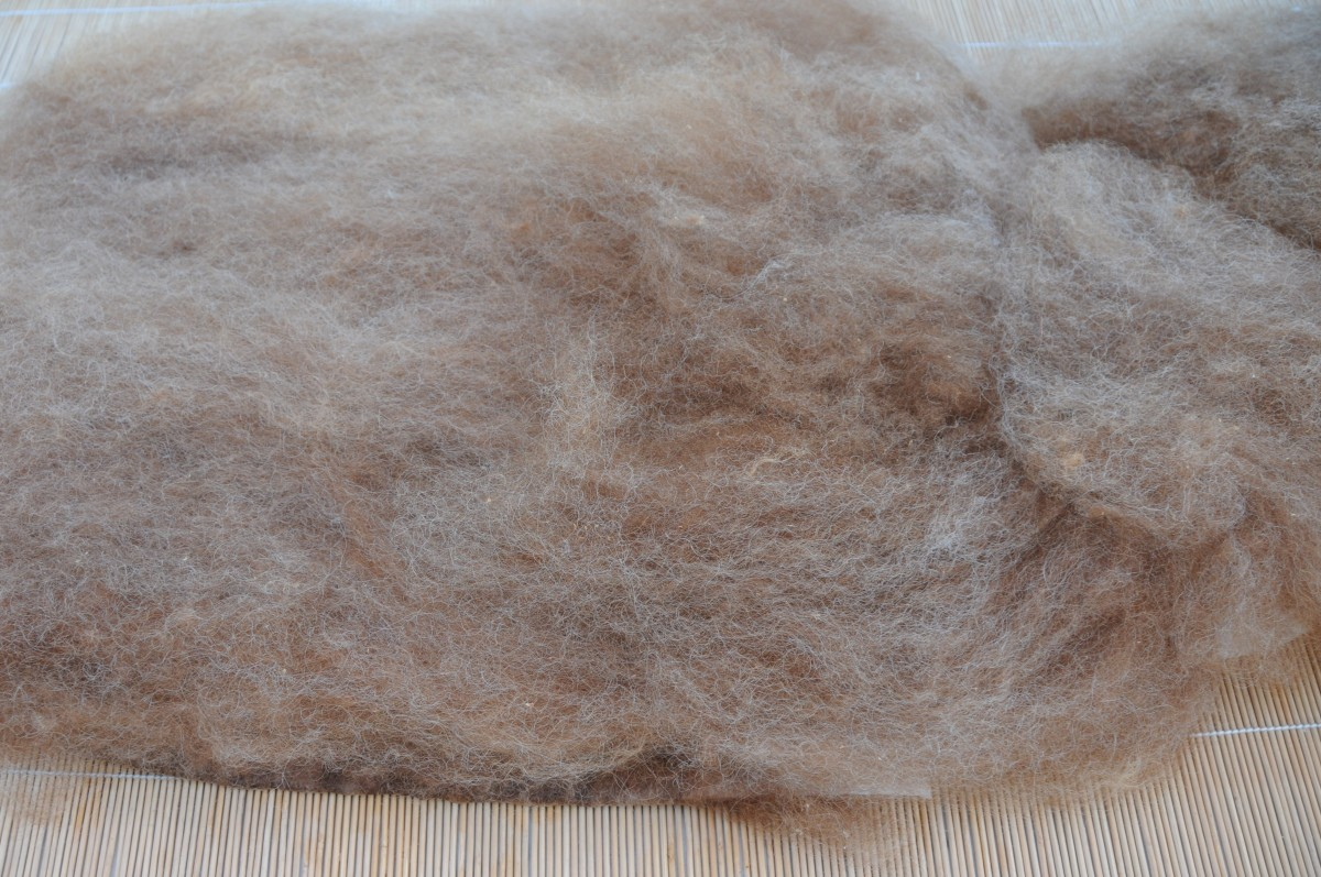 The lower half covered in wool