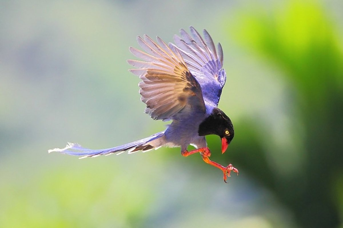 How to Capture Birds in Flight—Photography Tutorial