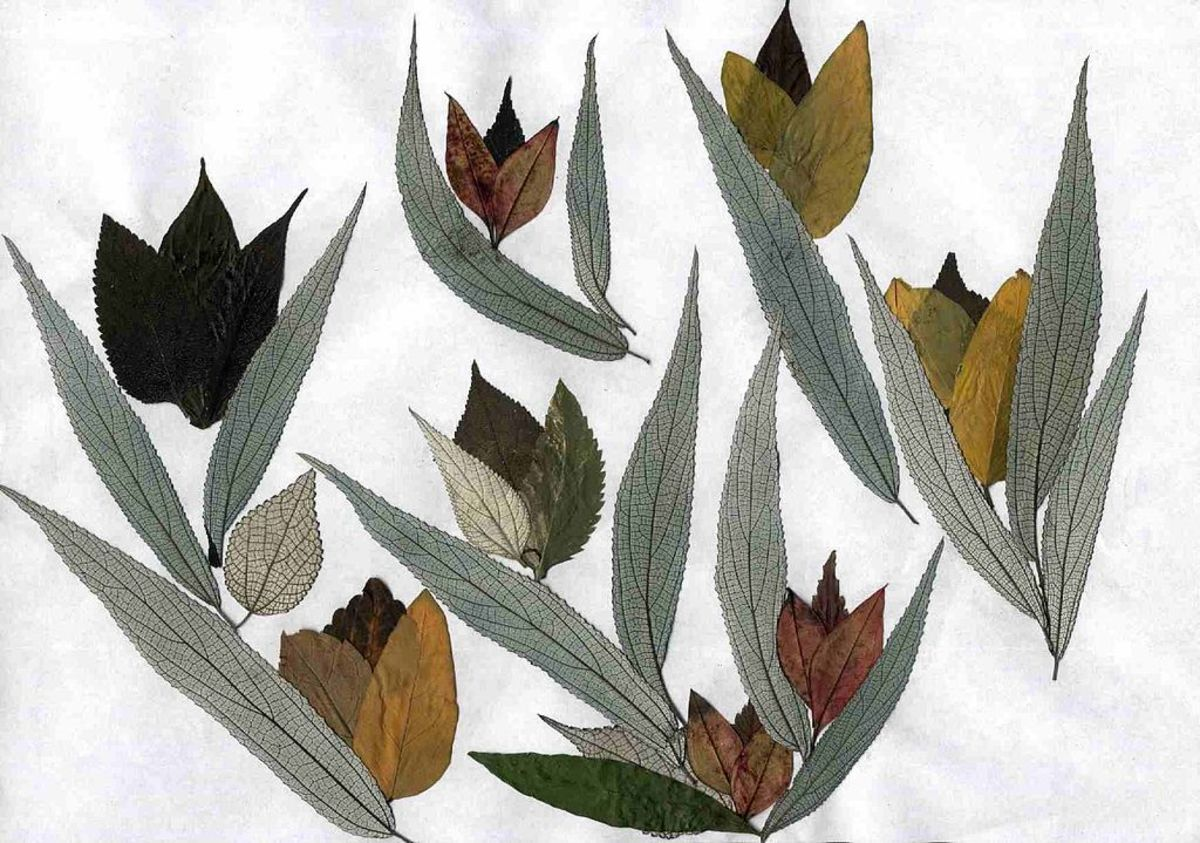 This image was achieved using both leaves and flattened flowers.