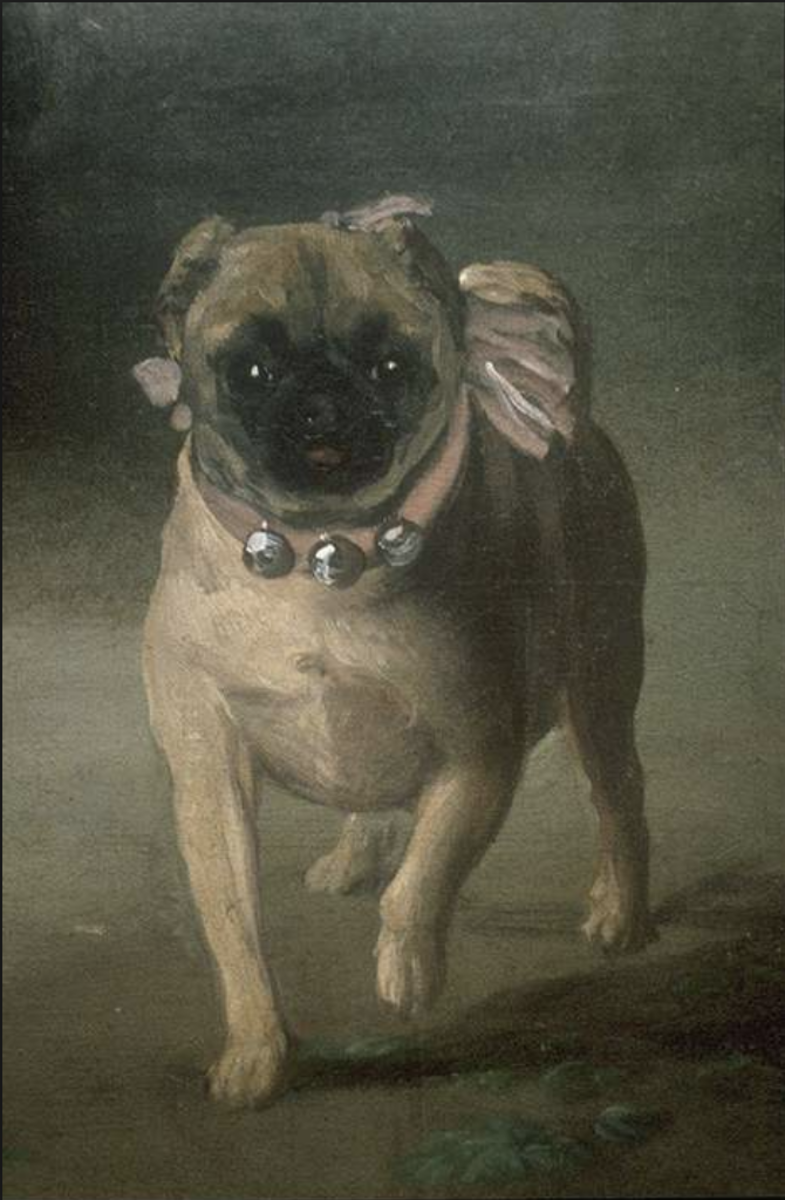 "Close-up of the Pug in de Goya's ""The Marquesa de Pontejos"""