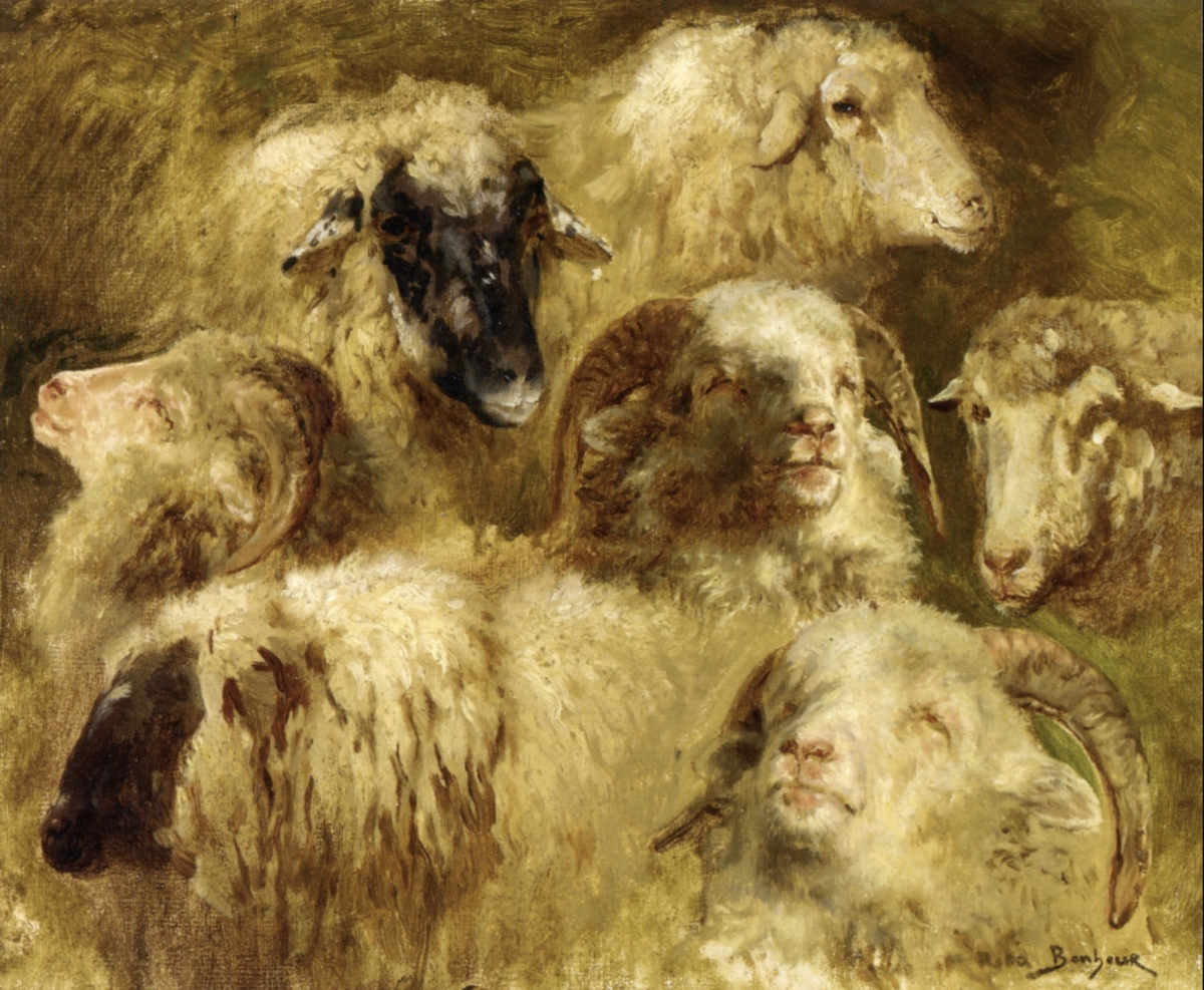 """Heads of Ewes and Rams"" by Rosa Bonheur (?)"