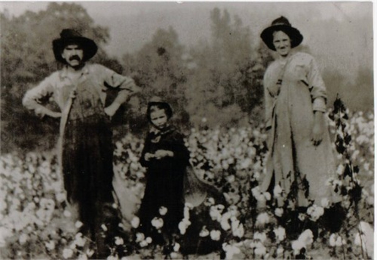 My grandmother picking cotton with her parents.