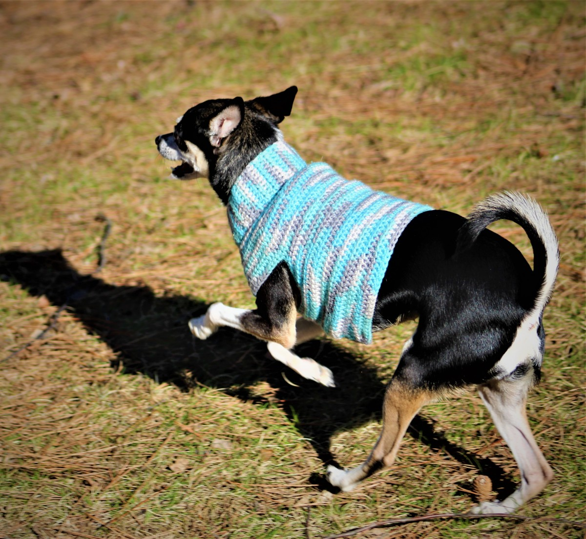 half-double-crochet-small-dog-sweater