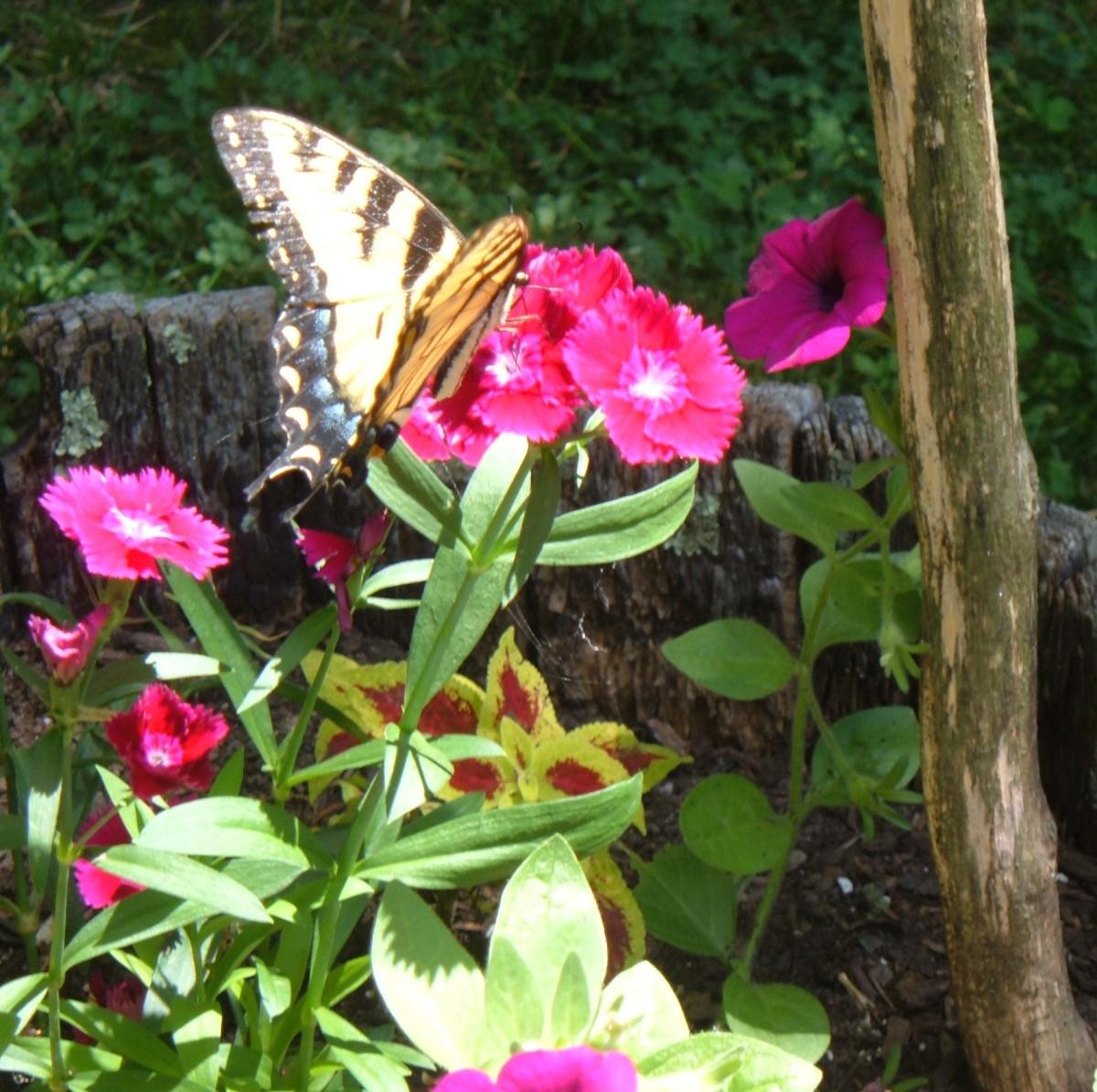 garden-butterfly-box