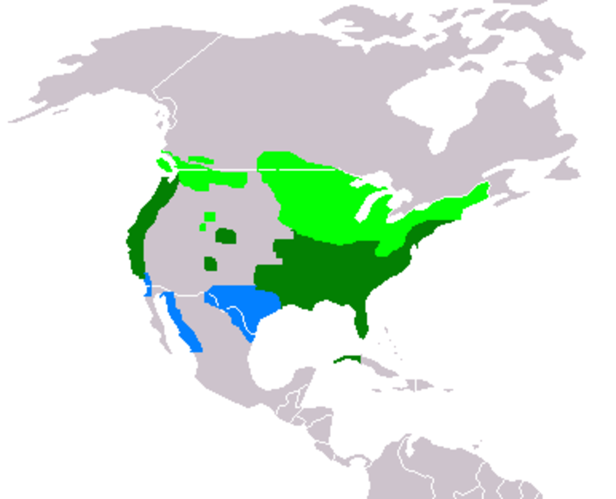 Wood Duck Range Map