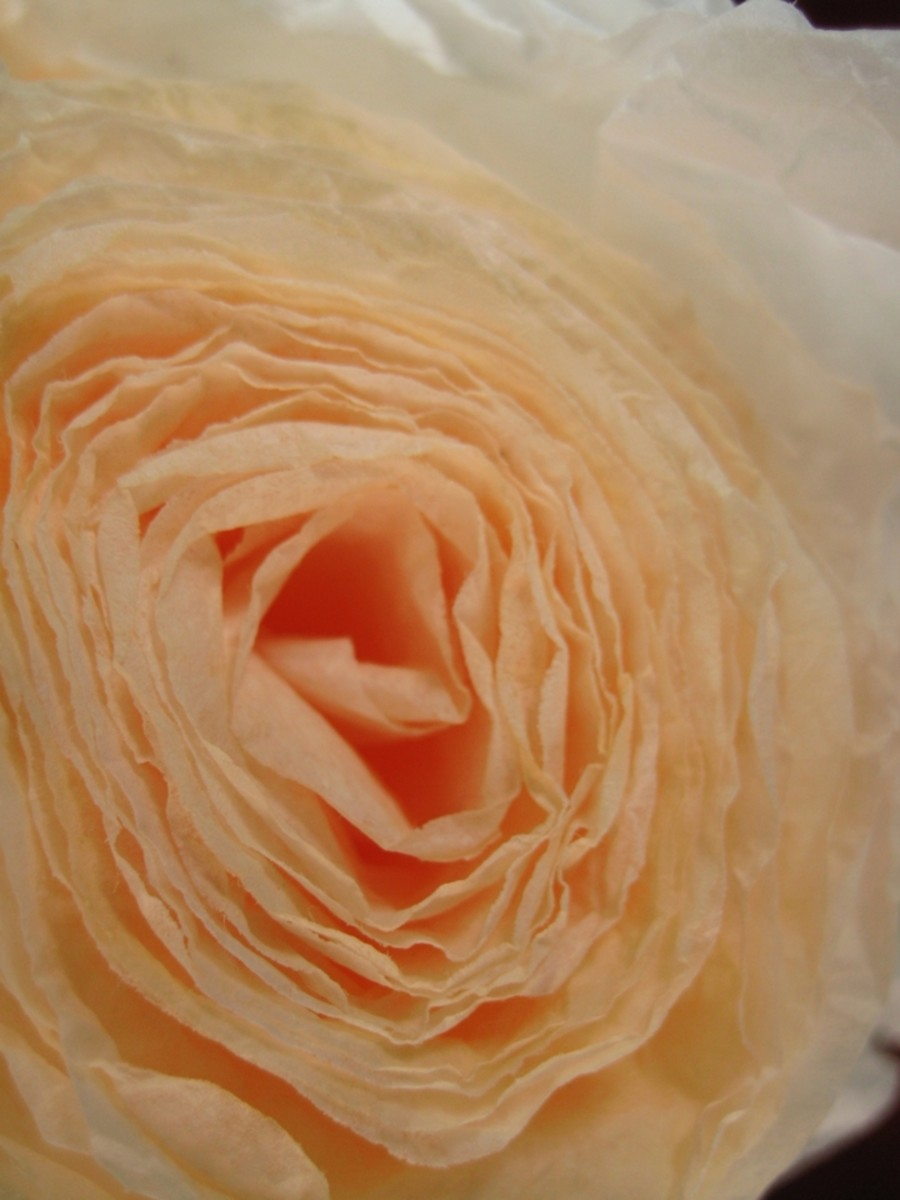 Close-up of Large Peach Coffee Filter Rose
