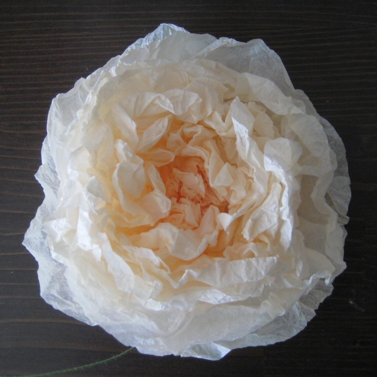 My second flower was a big tea rose.