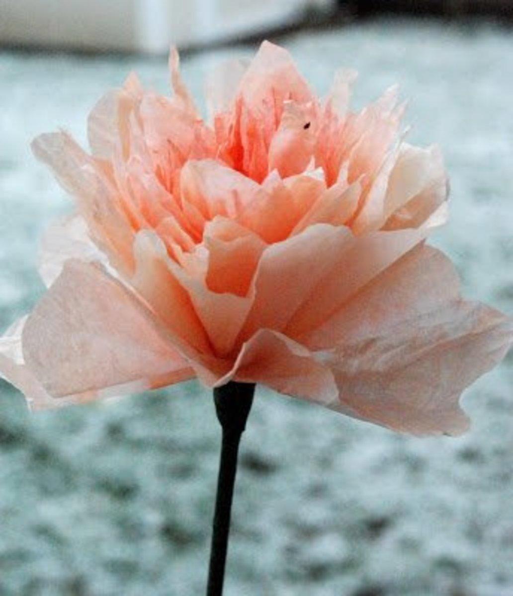 Peach Coffee Filter Flowers - Peony. Lively, Fresh Peony Flowers