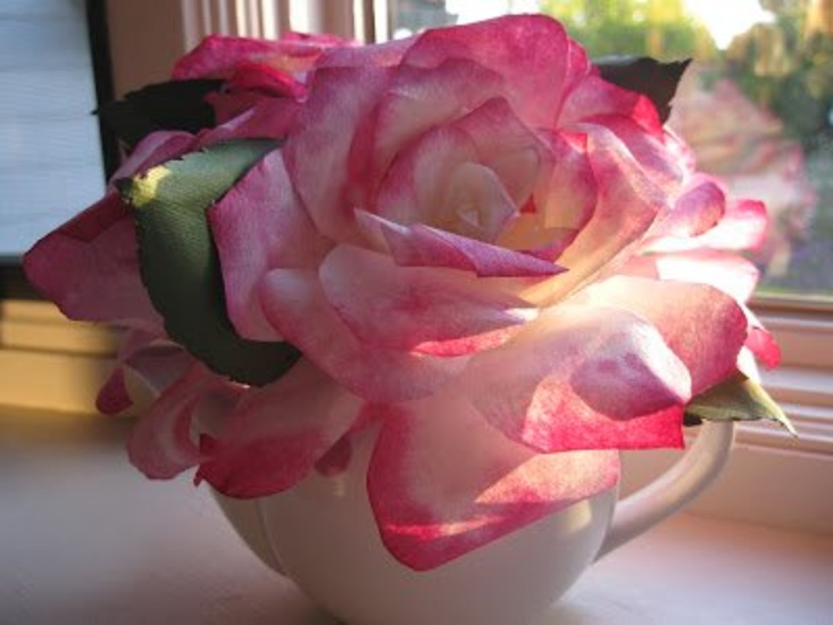 Beautiful pink-edged roses