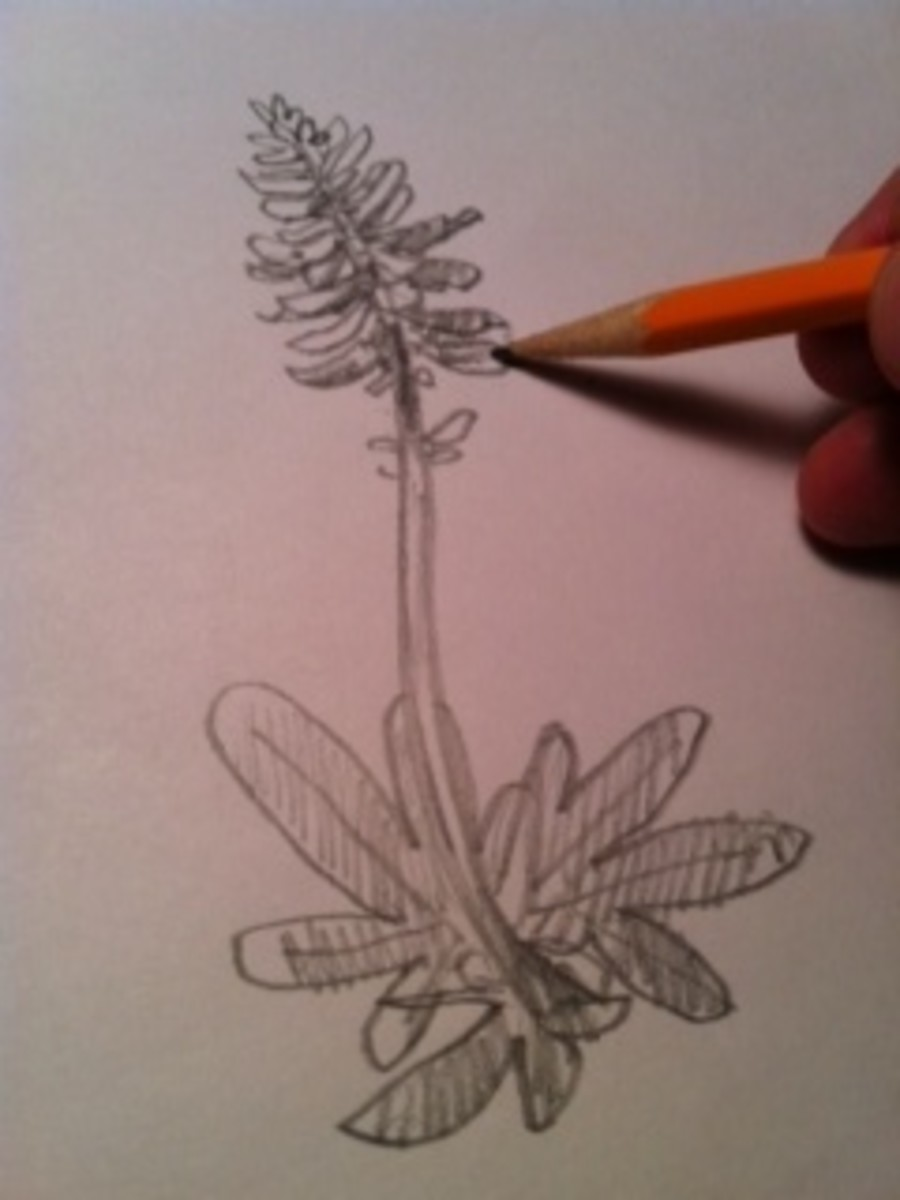 Step 6 continued: Add shading to the petals too!