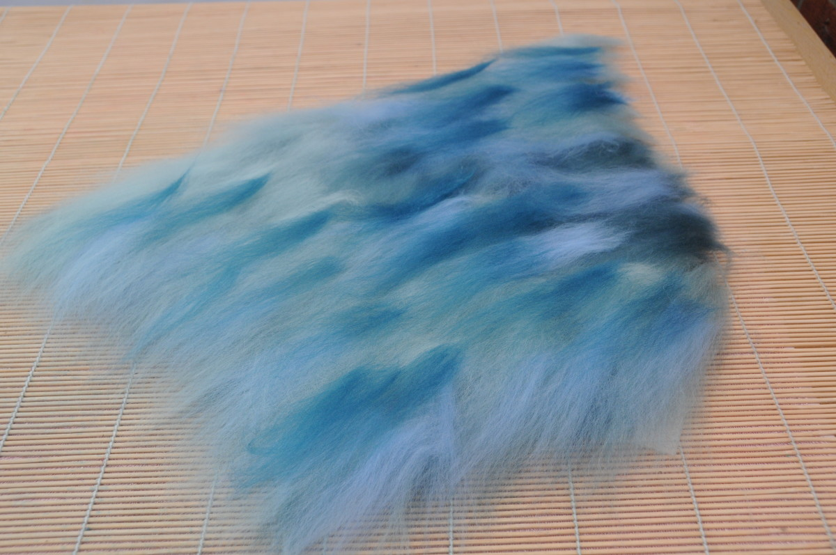 Cover the Dyed Teeswater curls with Merino Wool fibers.