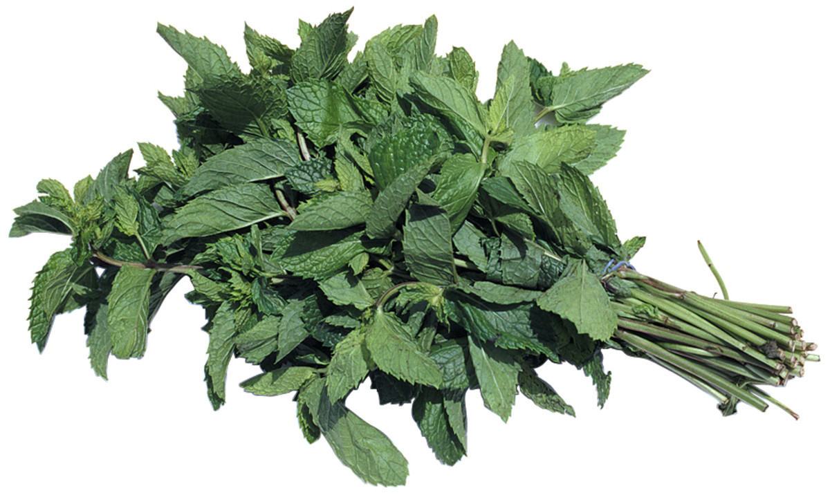 Be creative and just think about the smells that you love. I love to add mint because it smells so refreshing.