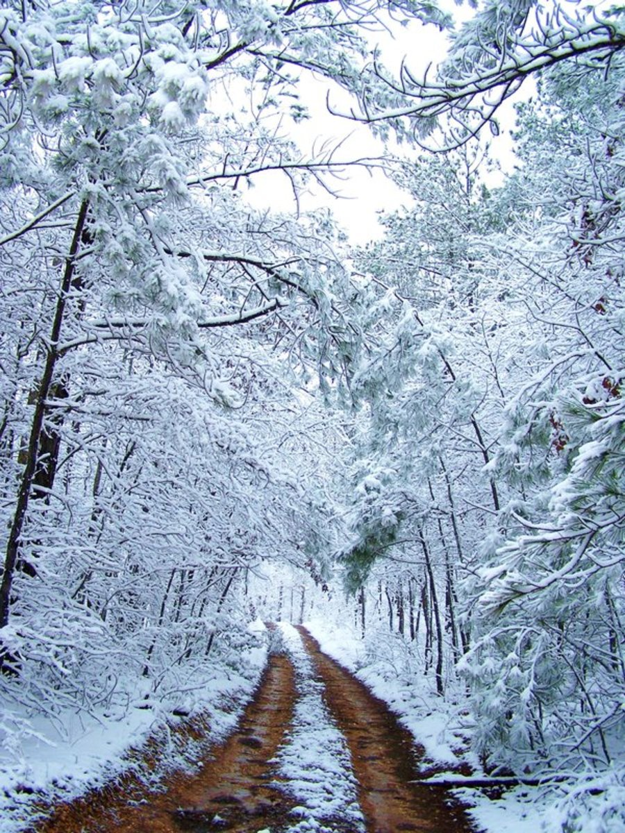 THE ROAD   This is what happens when you see something breathtaking and remember that your camera is with you in the car. Believe it or not, this is my driveway in March, in Alabama! Whenever I view this scene, I am instantly transported.