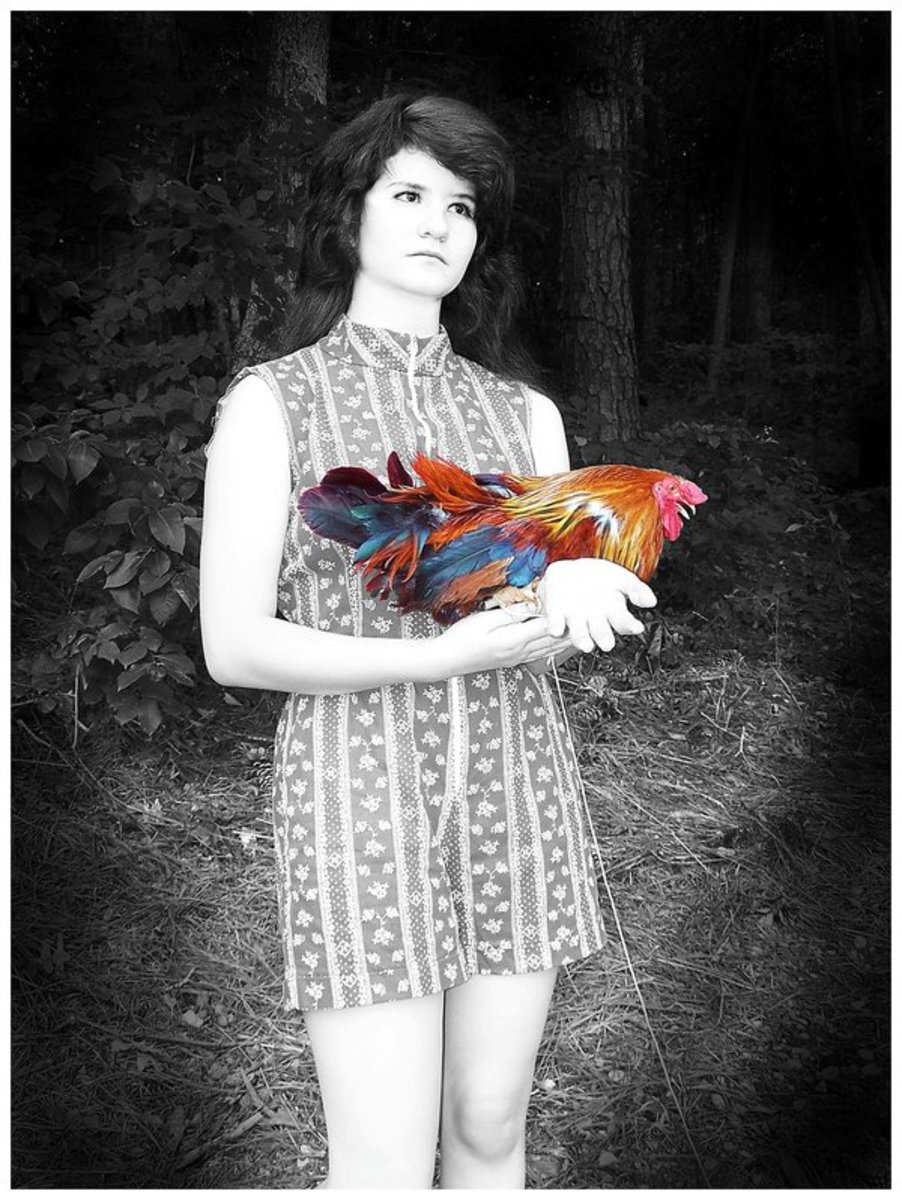 """""""Autism."""" My goddaughter has Asperger Autism. She has a gift with animals. She loved holding the rooster and we both liked how the colors of the feathers were an abstract version of the Autism Awareness logo."""
