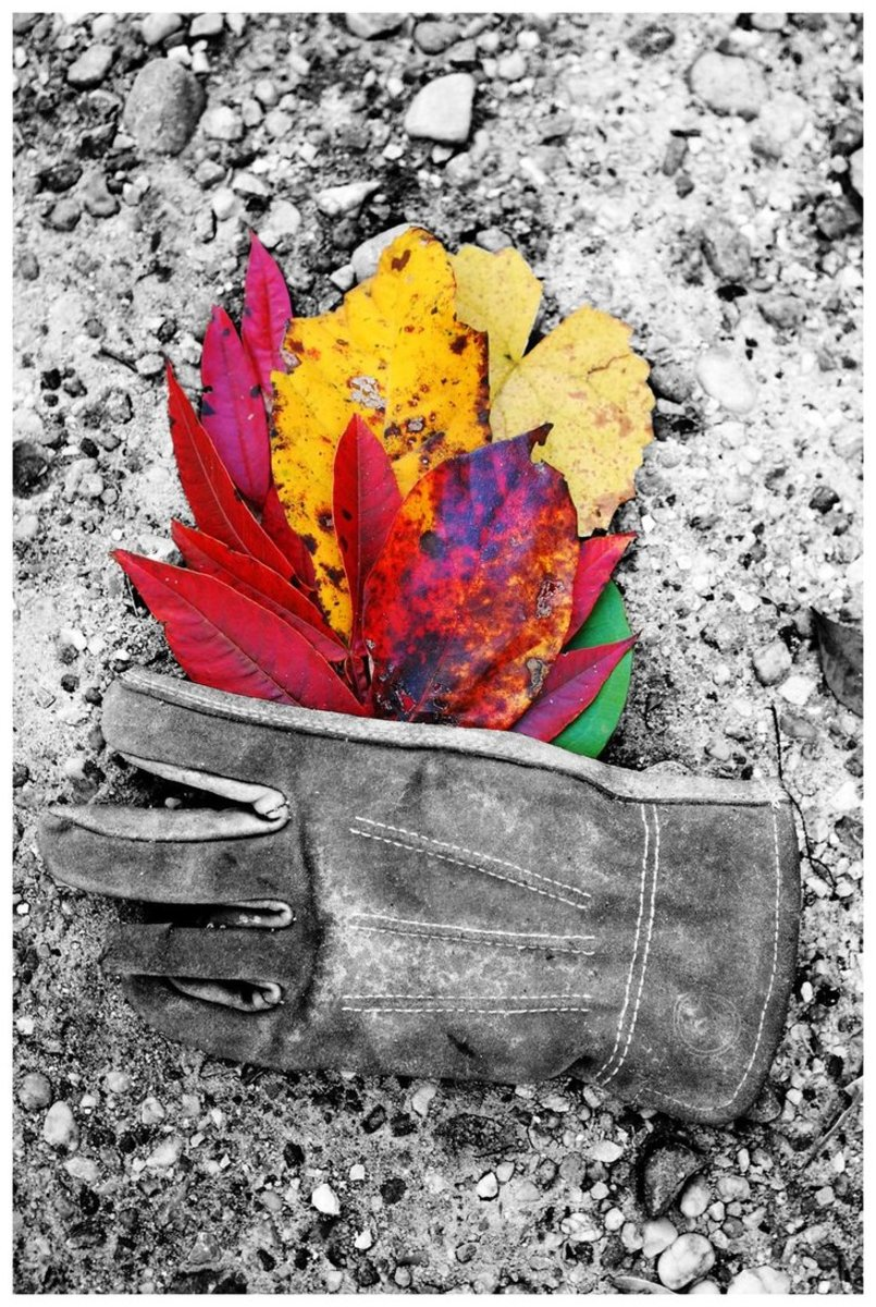 AUTUMN BOUQUET    I love the juxtaposition of real, lucid colors against the simplicity of grayscale photography. To do this, I must make a black and white copy of my original photograph. I then cut and paste them together.