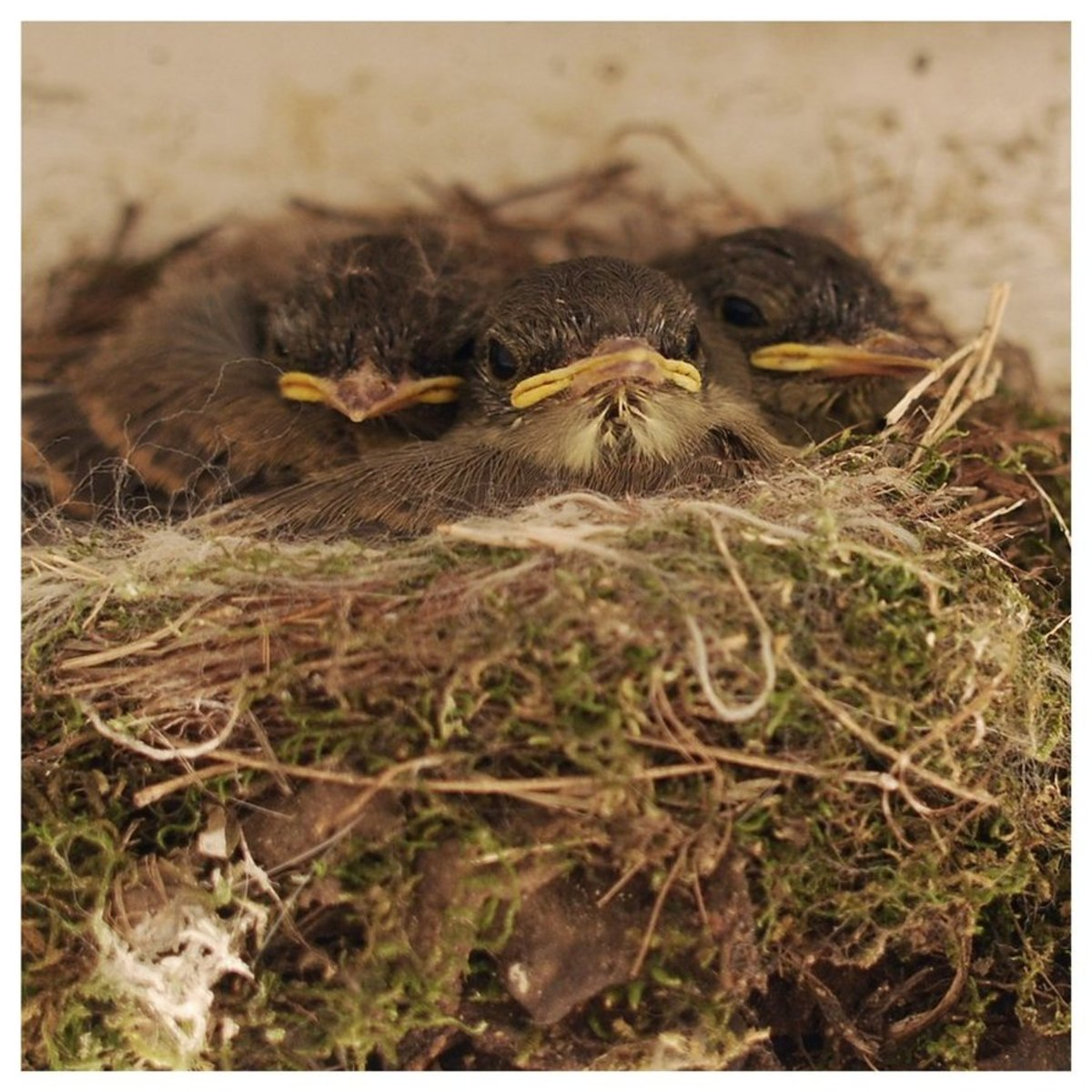 """""""Peep."""" These beauties nested in the eaves of our porch and I couldn't resist! I faded the original color to soften the image. For me, it created a cleaner, sweeter vibe."""
